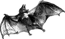 Bats-5198131_300